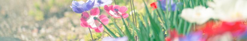 色々な色の花